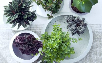 What Houseplants are in stock this Month?