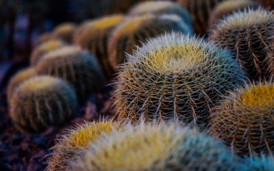 Local Cacti Enthusiast Dave Clarke will be here at The Secret Garden – Saturday 8th of July from 10am – 5pm