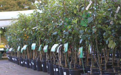 FRUIT TREES – APPLES – PEARS – CHERRIES and more – NOW IN STOCK!