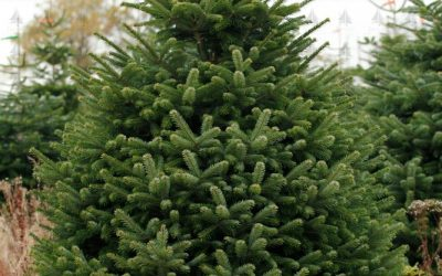 We will NOT be recycling Christmas trees this year!!!
